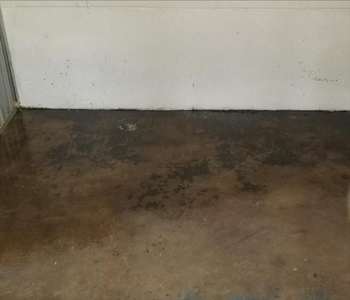 This is a photo of concrete flooring with mold on it.